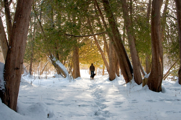 A Winter Walk in Guelph's Woodlands
